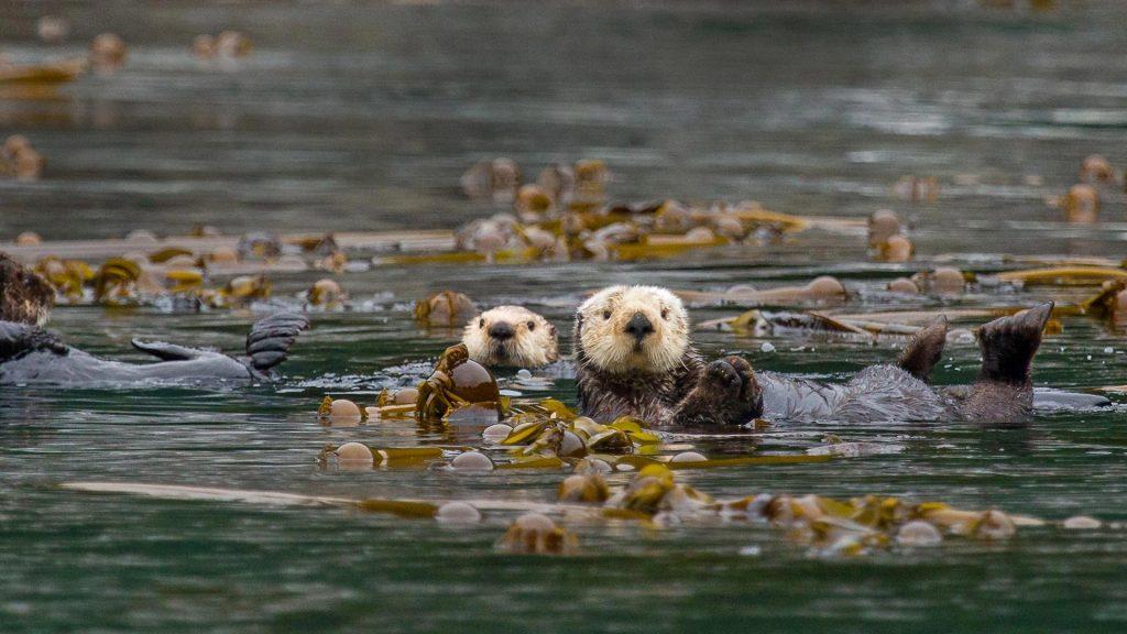 Kelp Keepers