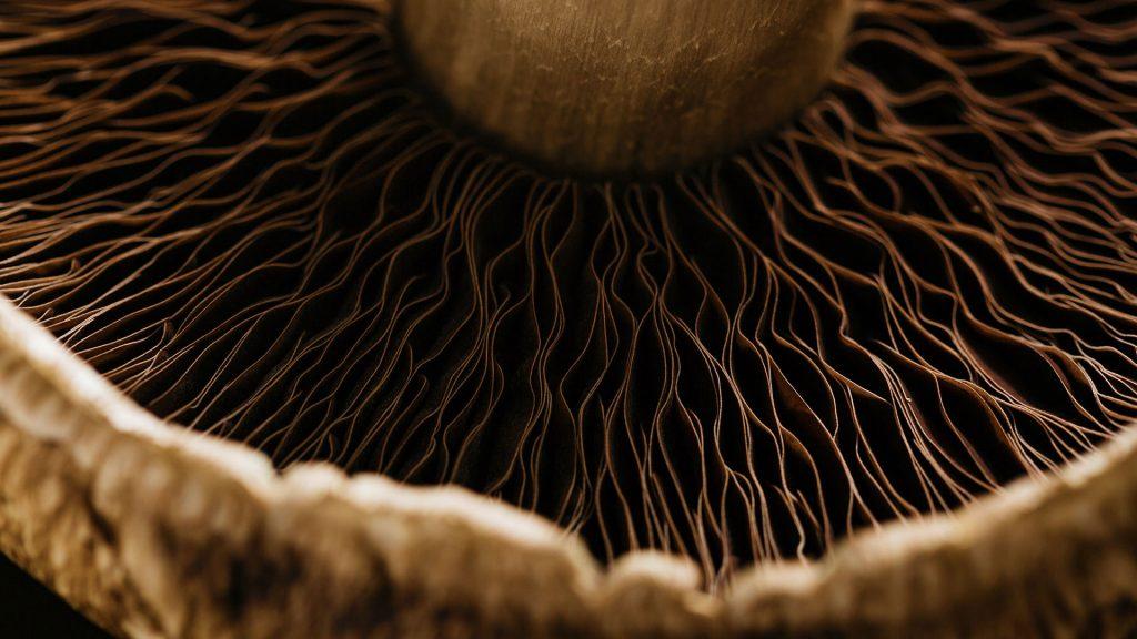 Mushroom Month
