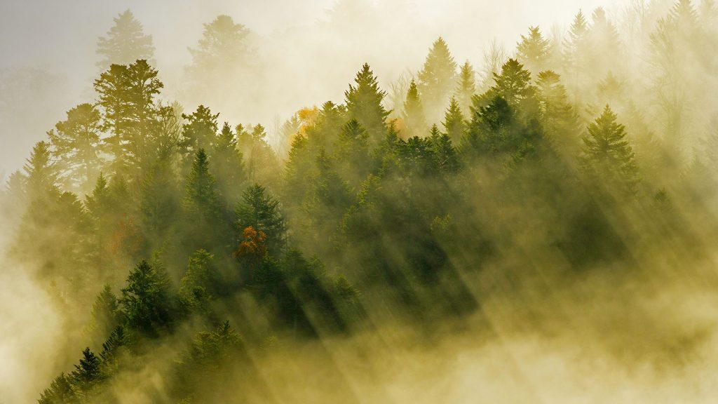 Sunbeams Forest