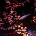 Leaves Goldfish