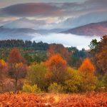 Trossachs Autumn