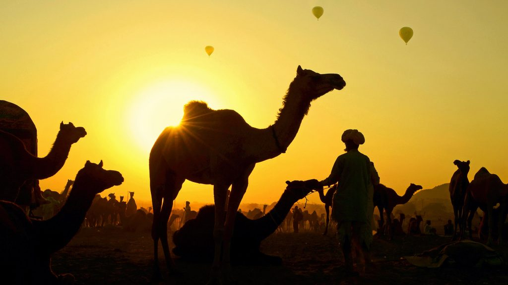 Camels Balloons