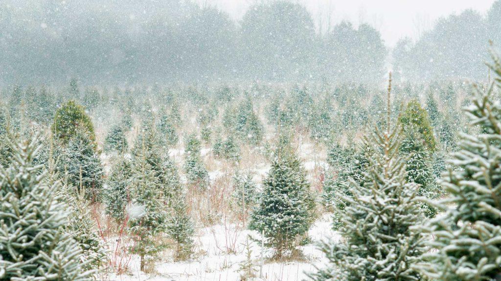 Canada Tree Farm