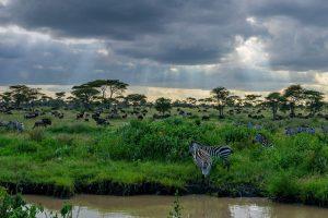 Safari Savannah