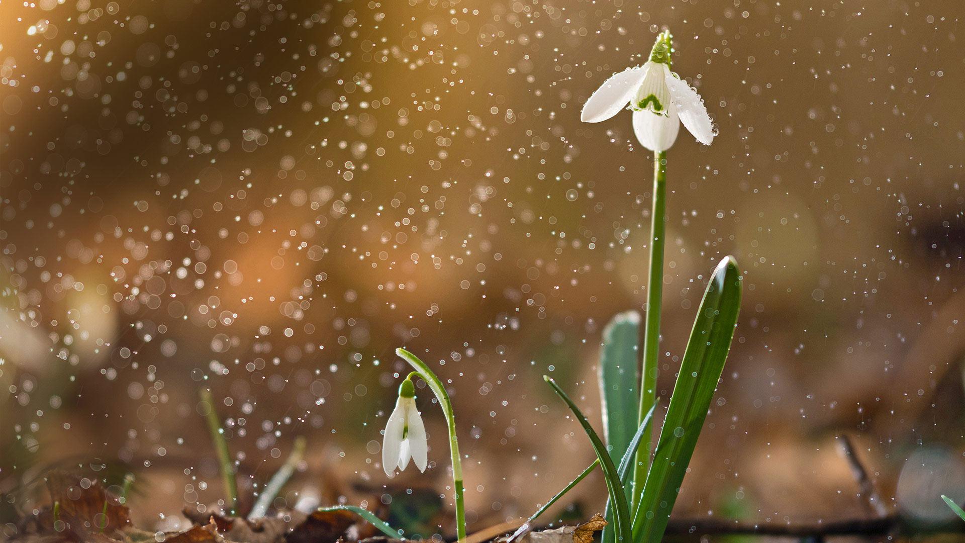 Sneeze Spring