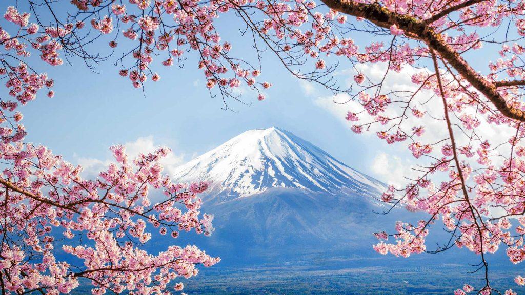 Fujisan Sakura