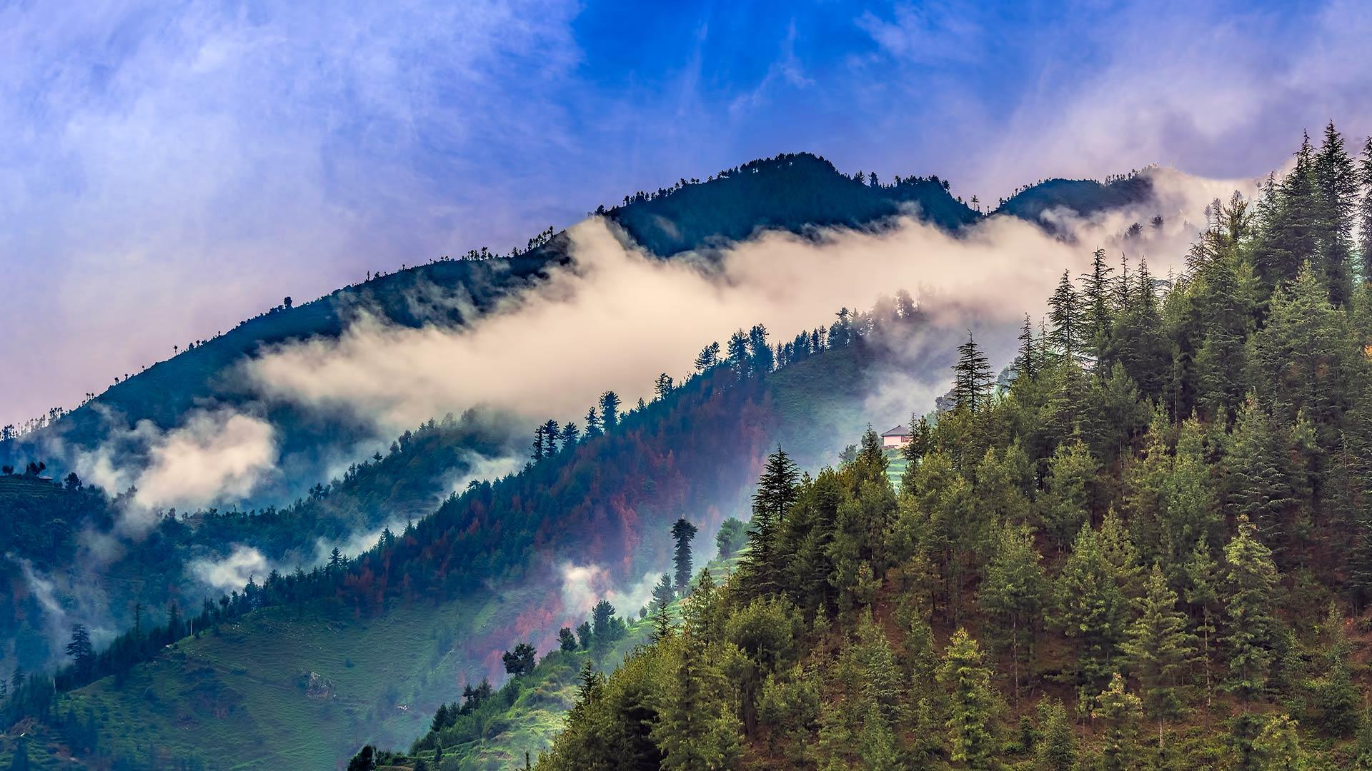 Janjheli Forest