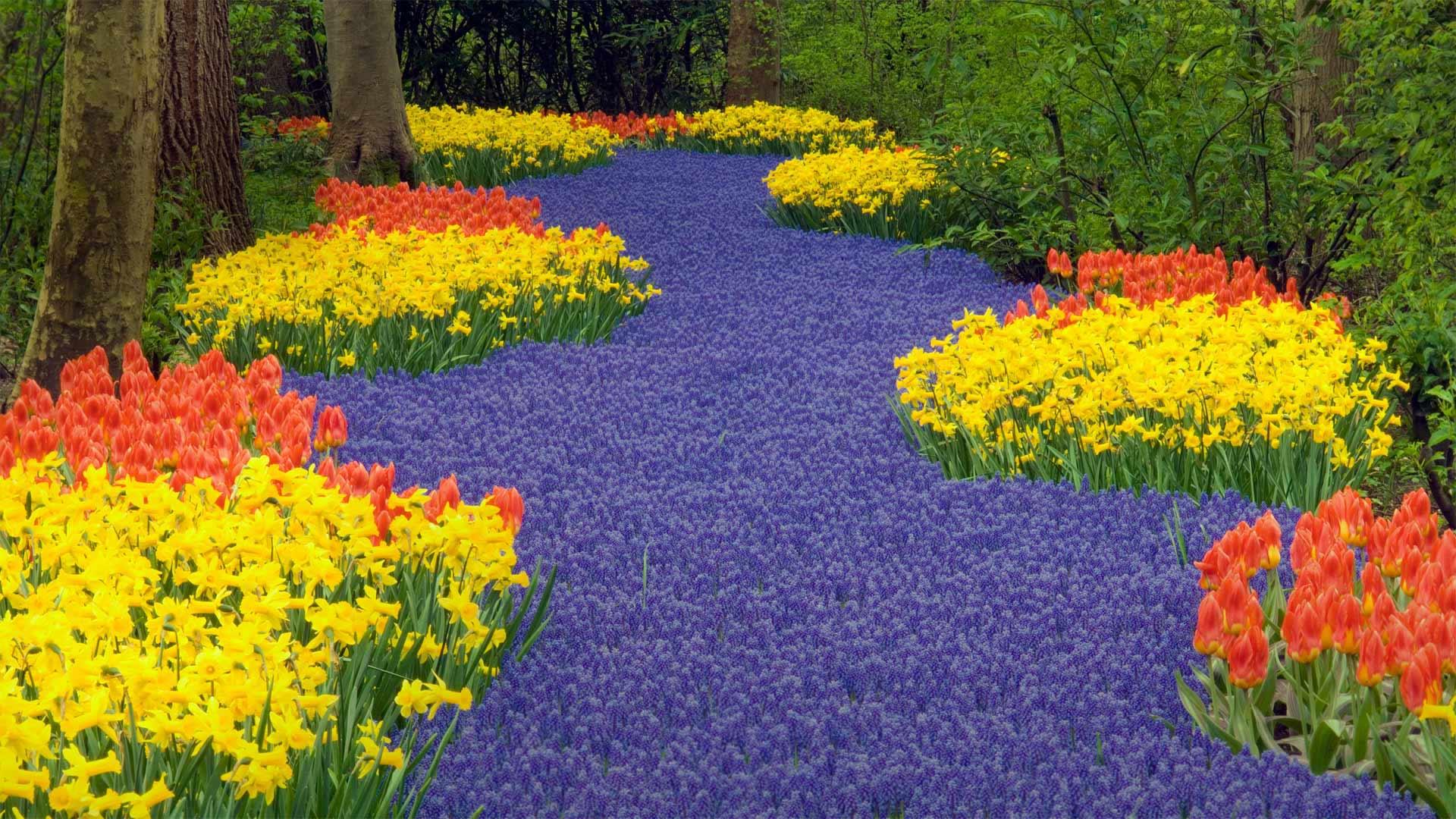 Garden Holland