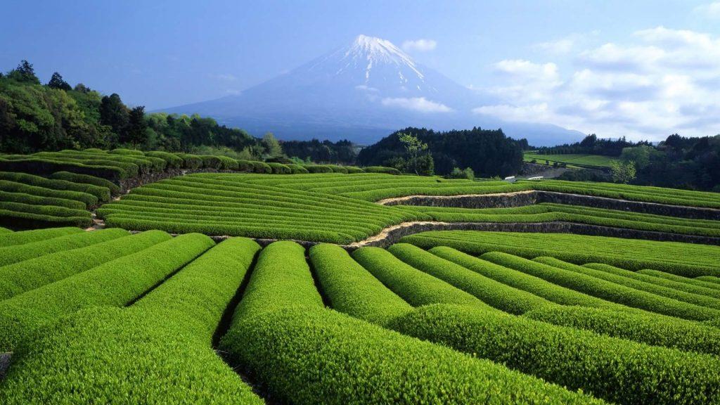 Fuji Cha