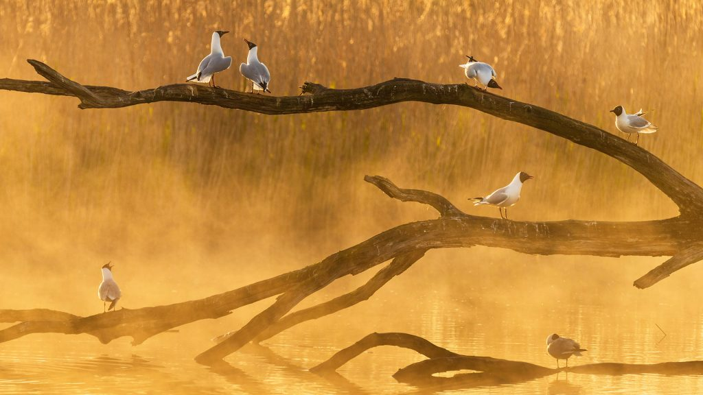 Seagulls Chat