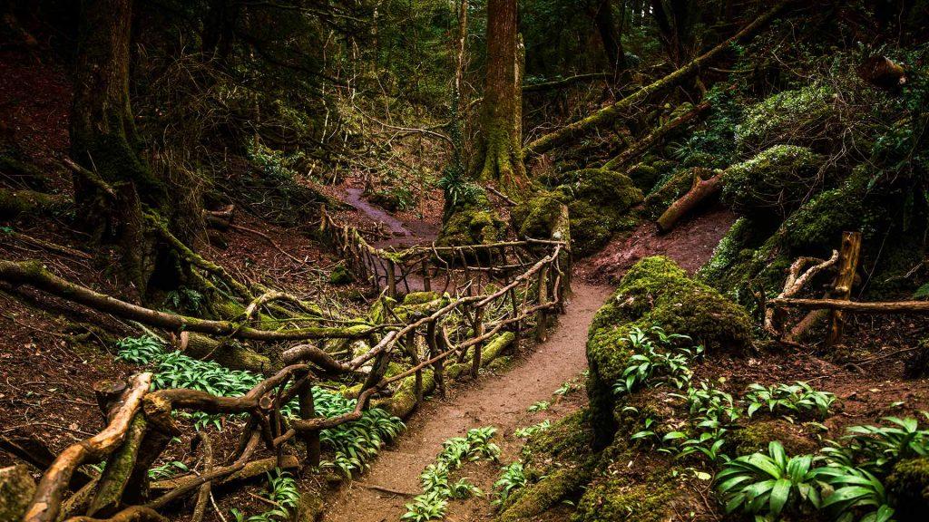 Puzzlewood Path