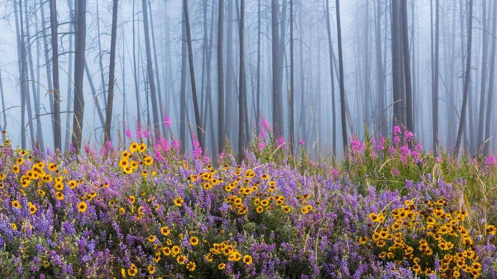 Wildflowers BC