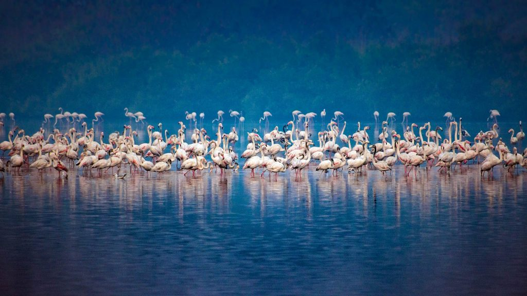 Flamingos Mumbai