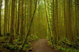 Golden Ears Forest