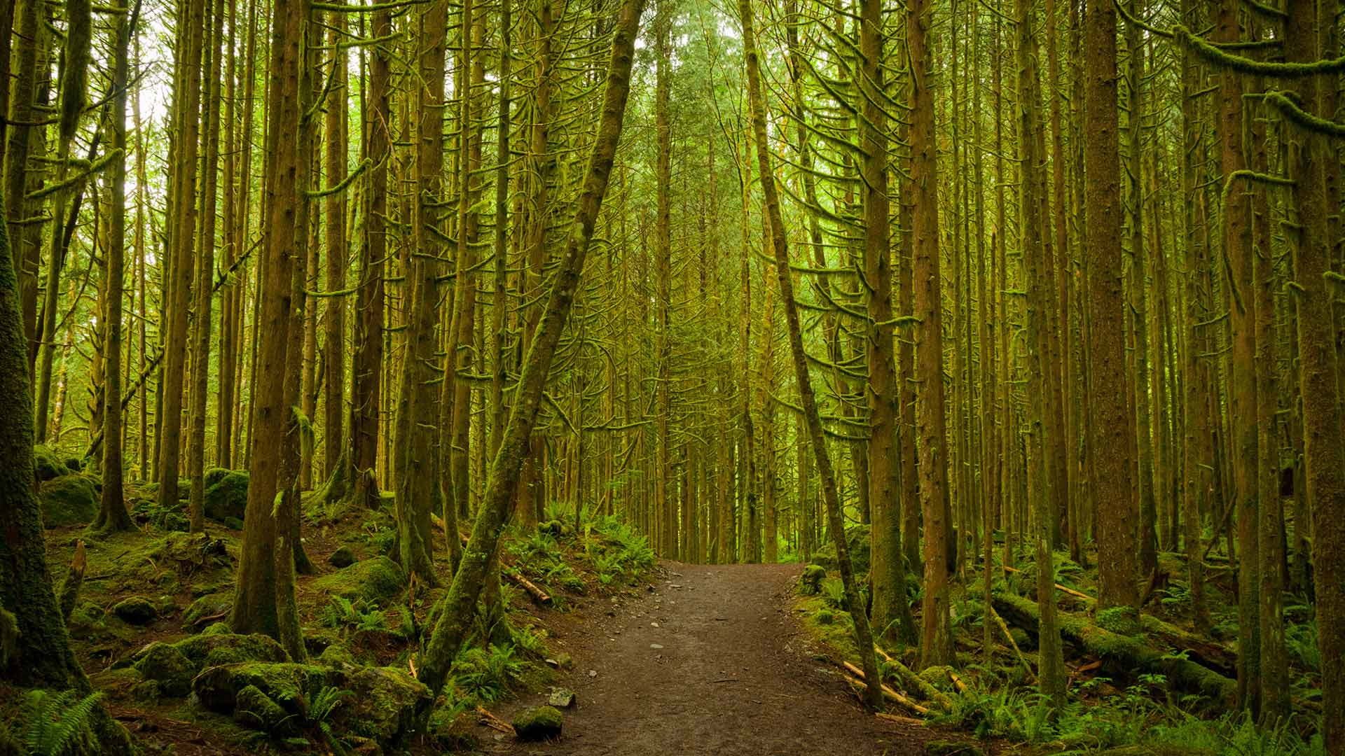 Golden Ears Forest