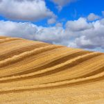 Wheat Castilla