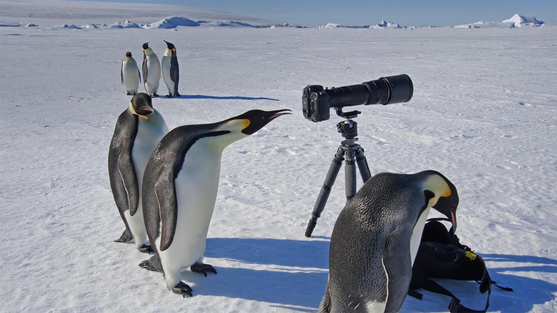 Photography Emperor