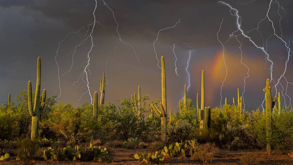 Saguaro Lightning