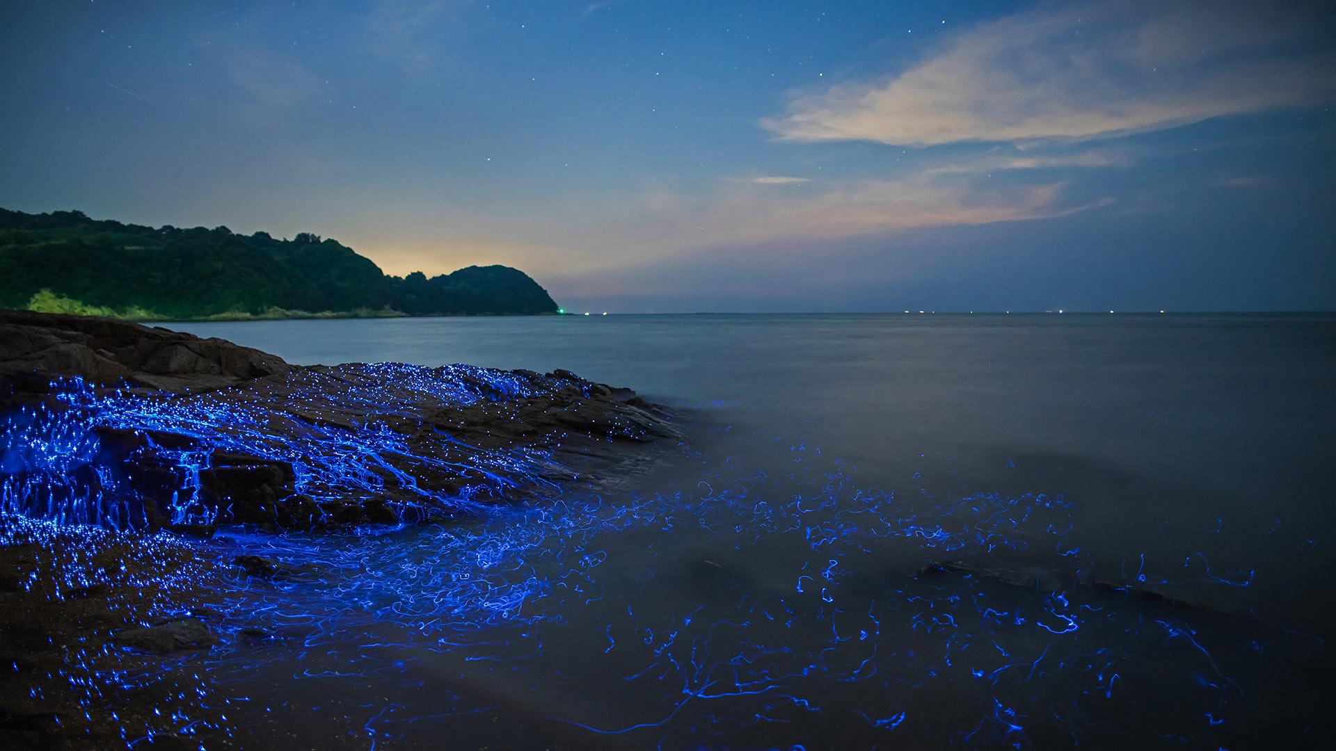Sea Fireflies