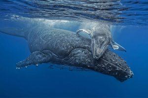 Whale Hug