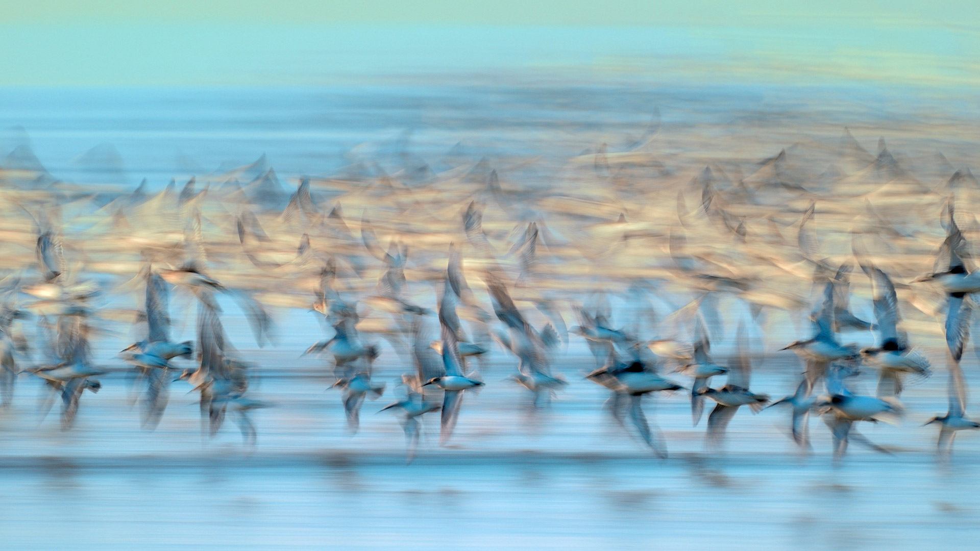 Blurry Flock