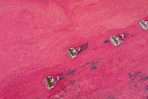 Drone Cranberry
