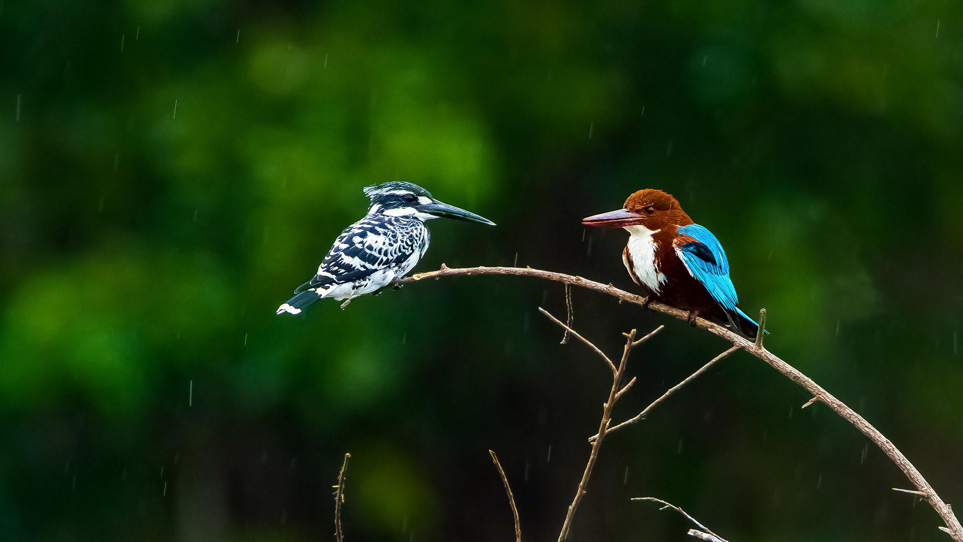 Kingfishers India