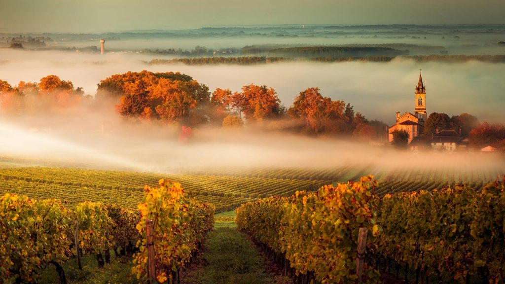 Misty Vineyard