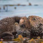 Monterey Pup