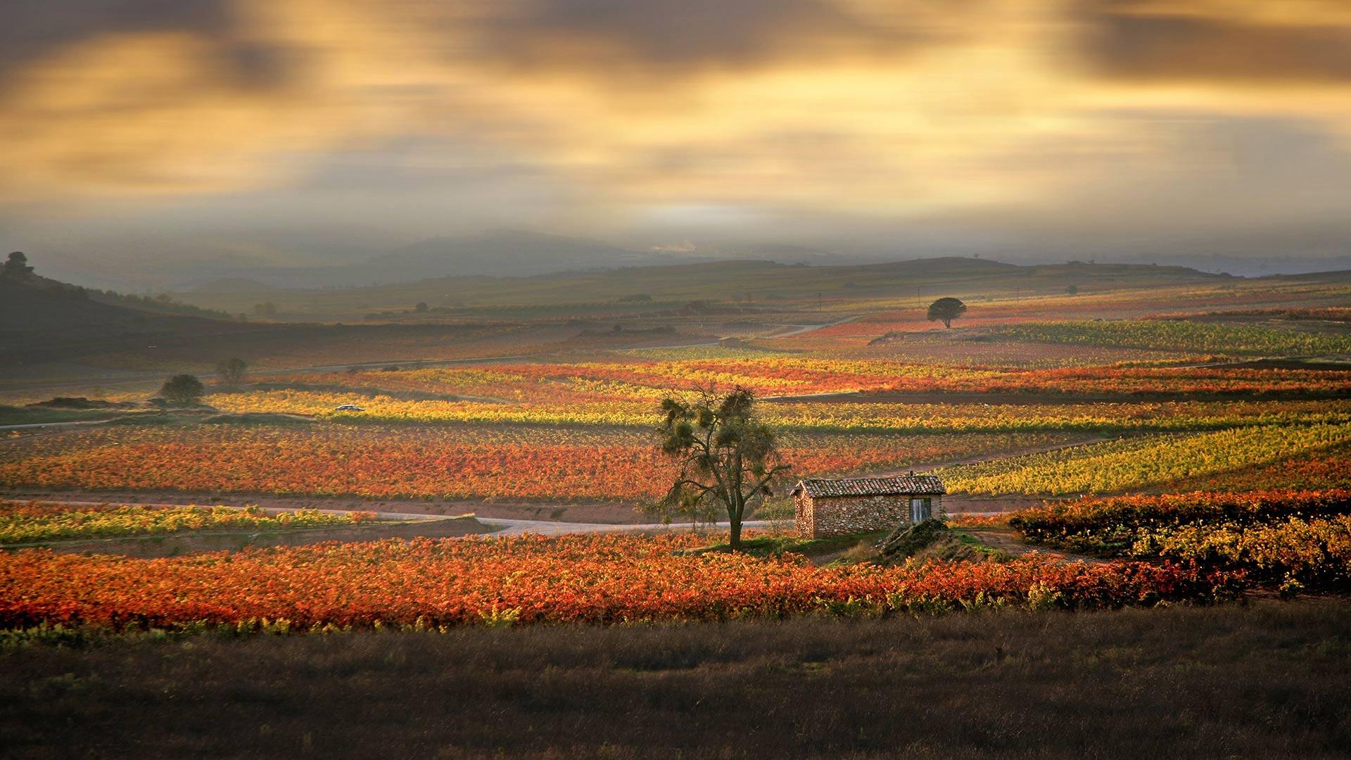 San Mateo Wine