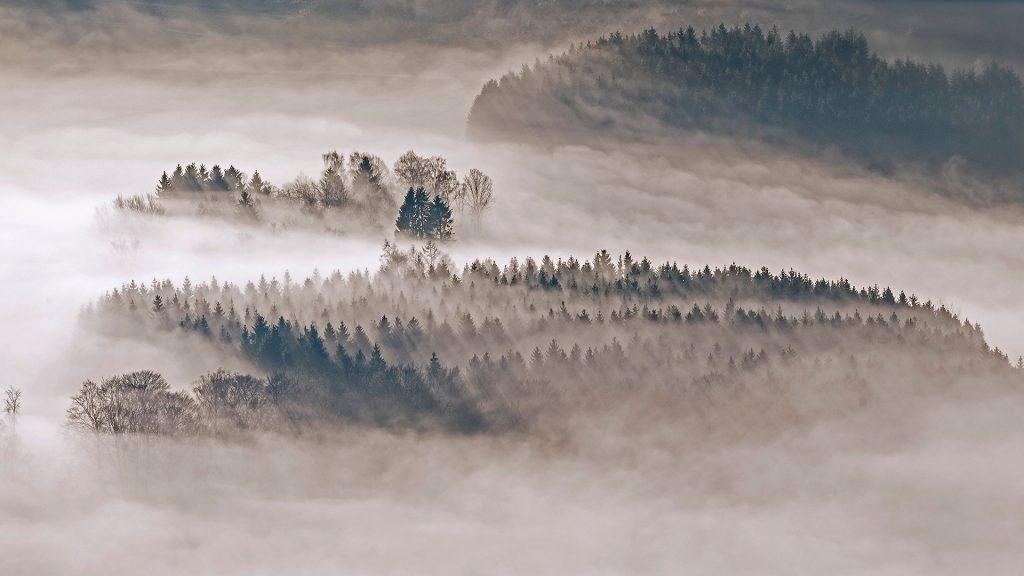 Meschede Wald