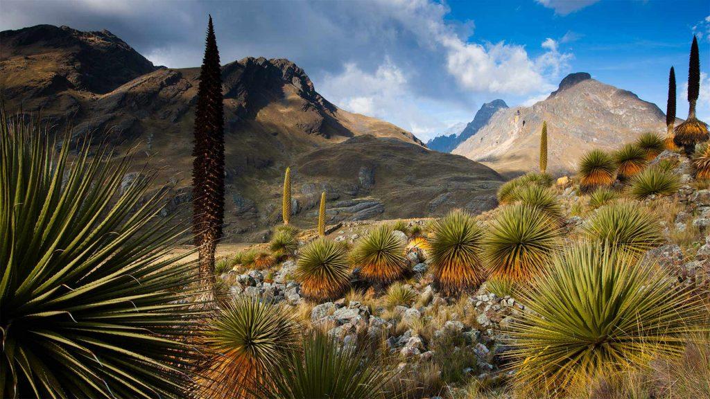 Queenofthe Andes
