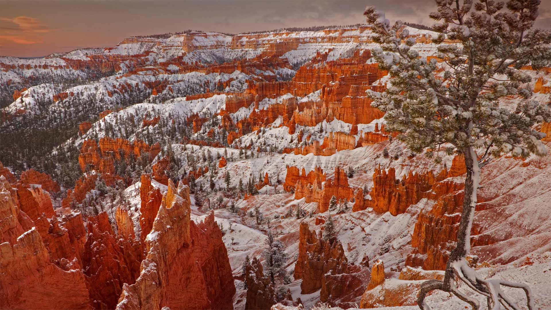 Winter Bryce