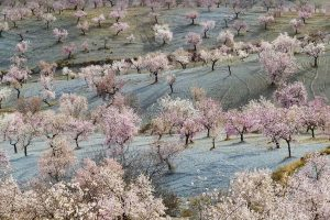 Almonds Almeria