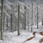 Vosges Bio Reserve