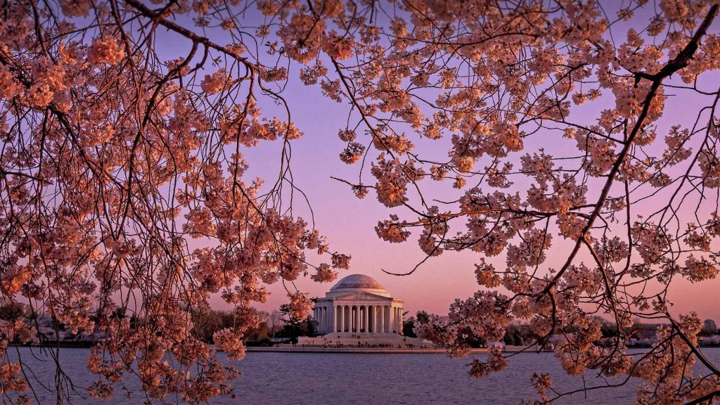 Jefferson Cherries
