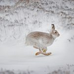 Mad Hares