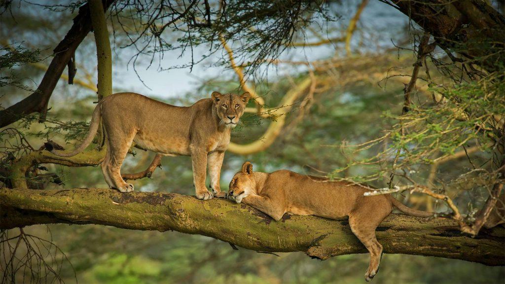 WWD Lions