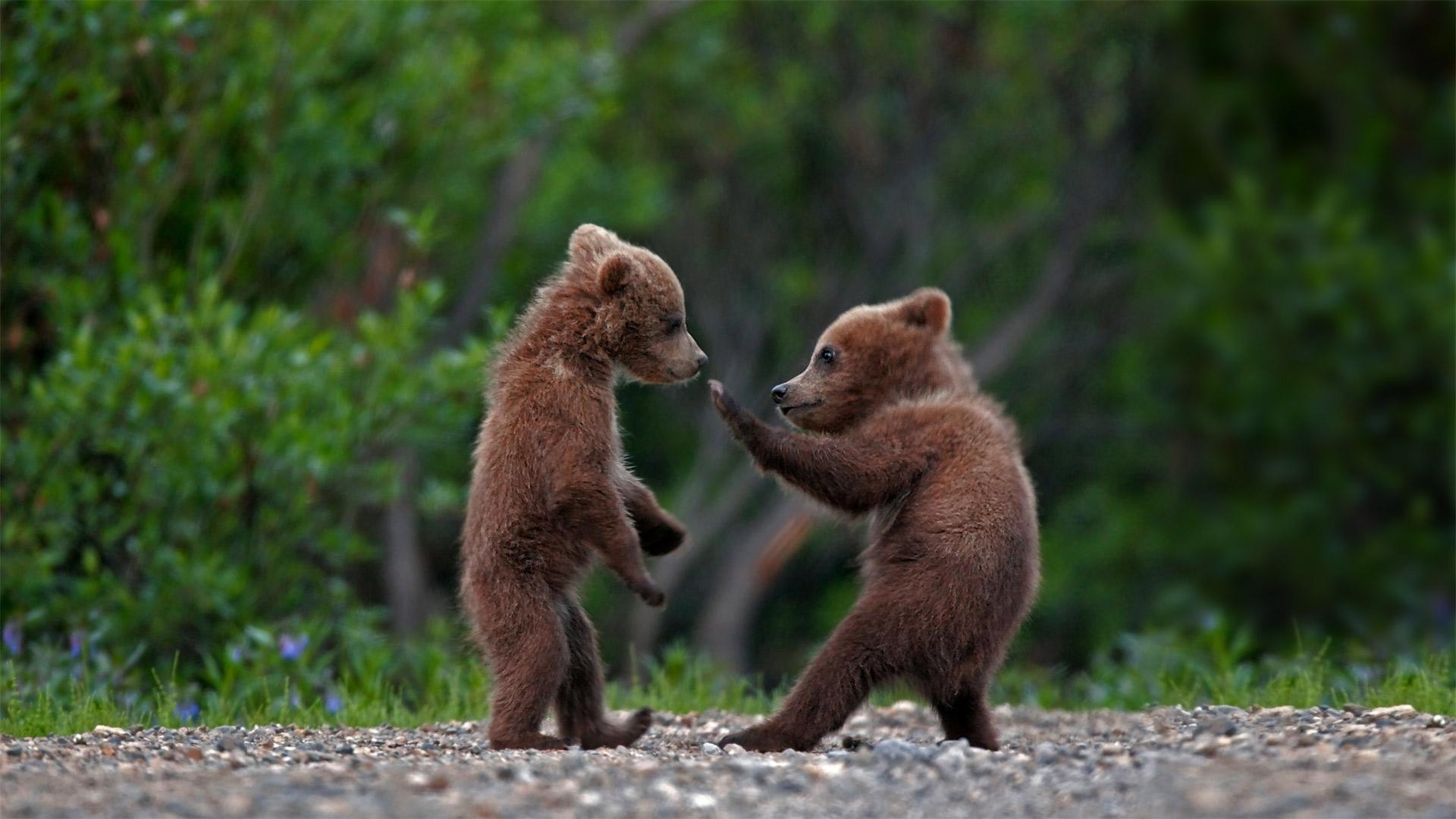 Sibling Bears