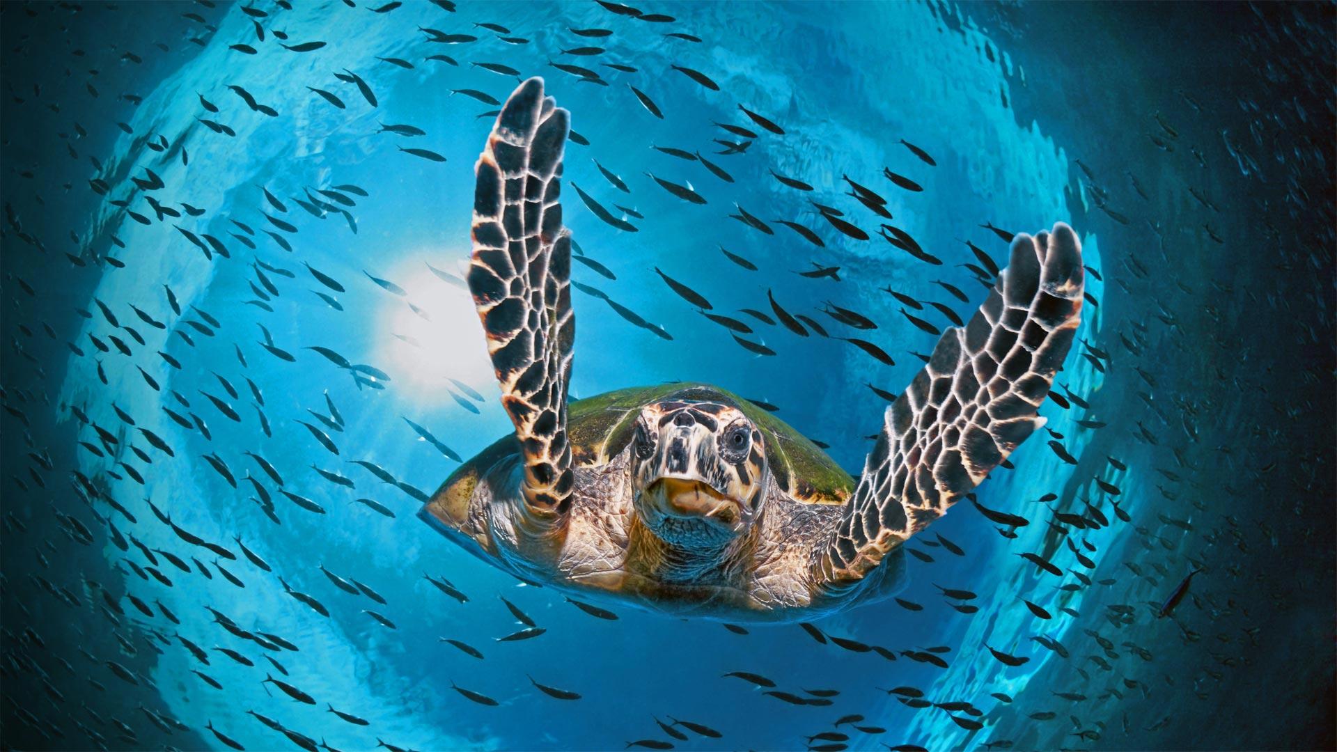 GBR Turtle