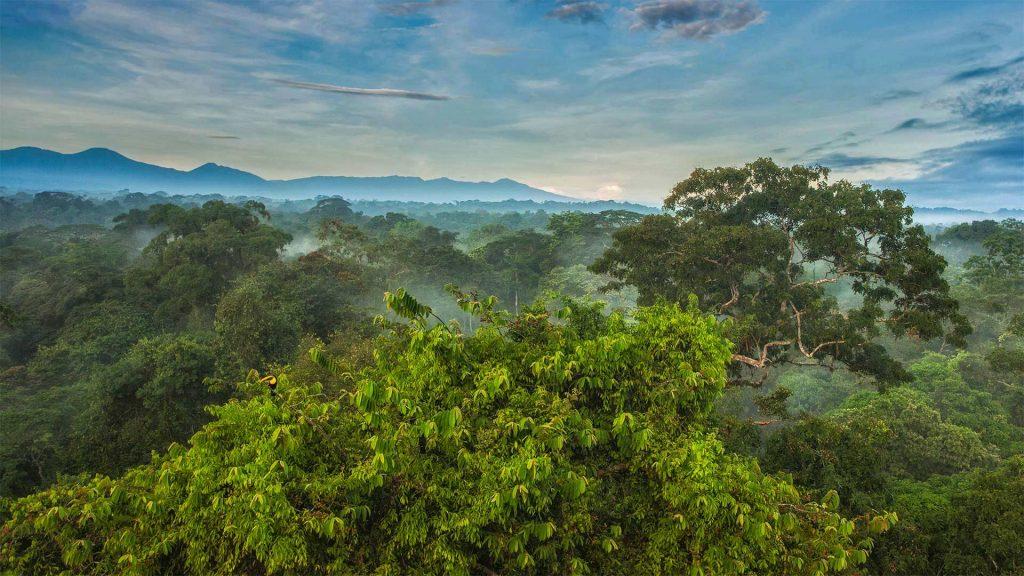 Toucan Rainforest